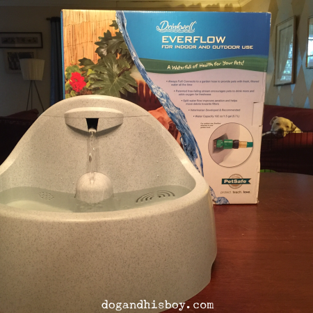As you can see, Edison is keeping a watchful eye on his new PetSafe fountain!