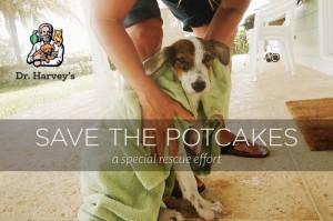 Potcake Dogs