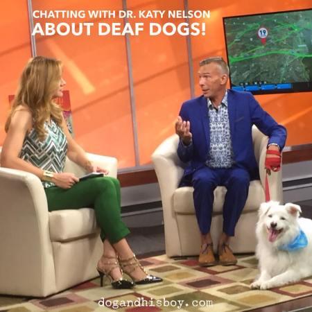 Deaf Dog Awareness Week 2015, deaf dog blog