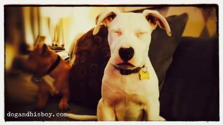 Foster the Deaf Dog, Dog & His Boy, Dog and His Boy, Deaf Dog Blog