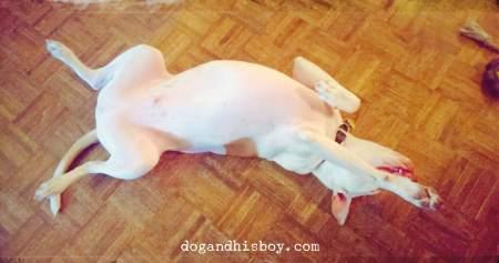 Edison the Deaf Dog, Dog & His Boy, Dog and His Boy, Deaf Dog Blog
