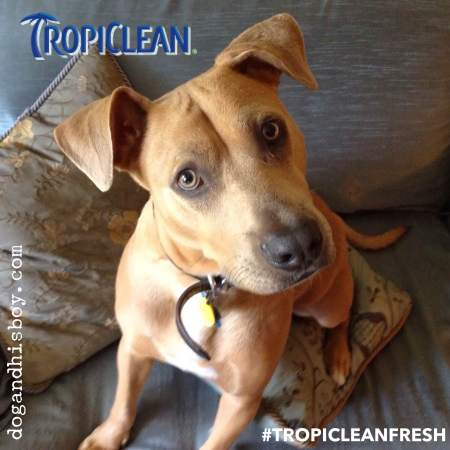 Deaf Dog Bad Breath? Try TropiClean Fresh Breath Drops