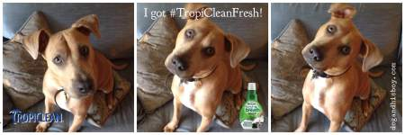 TropiClean Fresh Breath Drops Review, Dog and His Boy, deaf dog blog