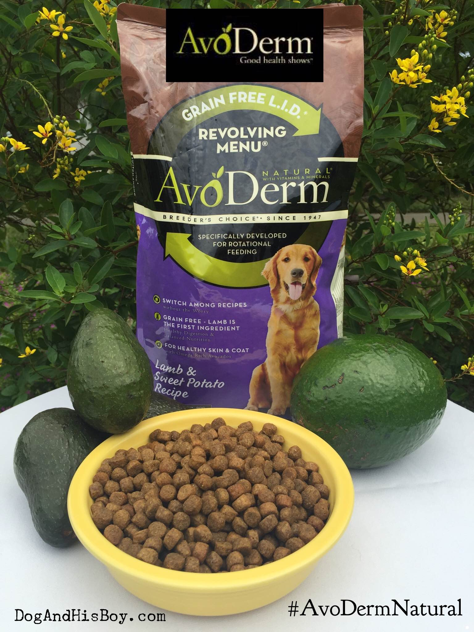 AvoDerm Natural, Deaf Dog Nutrition, Feeding avocados to dogs