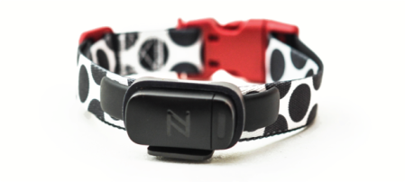 Nuzzle GPS Collar for Deaf Dogs, Dog & His Boy, Deaf Dog Blog